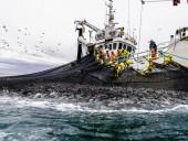 Пандемия: Норвегия отреагировала на заявления о том, что местный лосось - стал причиной вспышки COVID-19 в Пекине