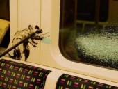 Бэнкси разрисовал вагон лондонского метро граффити о коронавирусе: его уже стерли