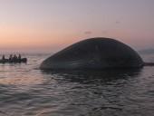 На индонезийский пляж выбросило гигантского кита