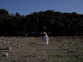 Пандемия: в Бразилии за сутки зафиксировали свыше 45 тысяч случаев COVID-19, более 1,6 млн в целом