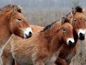 В Техасе впервые успешно клонировали лошадь Пржевальского