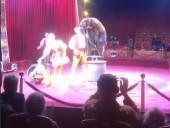 В российском цирке медведь напал на мужчину с ребенком