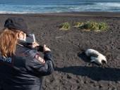 Вода на побережье Камчатки была отравлена из-за утечки с коммерческого танкера - СМИ