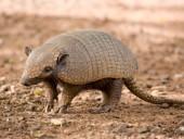 Названы ТОП-6 необычных животных, которые помогают производителям алкоголя