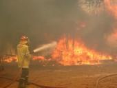 Масштабные лесные пожары накрыли Австралию: выжжено тысячи гектаров леса