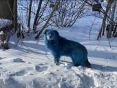В России посинела стая собак