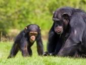 В США от коронавируса вакцинировали обезьян