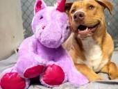"""В США собака из приюта несколько раз """"украла"""" игрушечного единорога из магазина: офицер купил ей игрушку"""