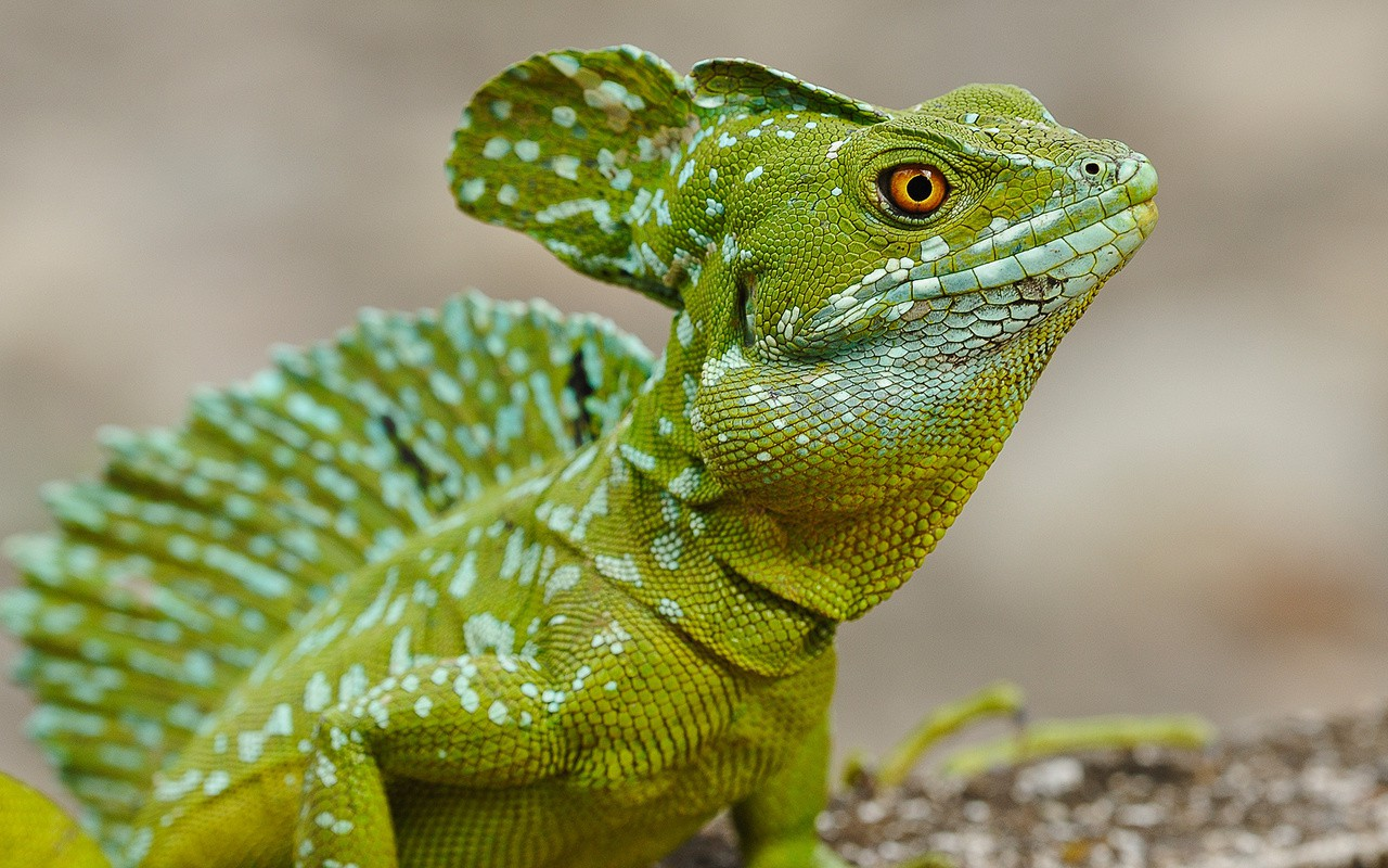 Информационный портал о животных и рептилиях