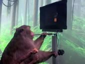 Без джойстика: появилось видео, как обезьяна с чипом в мозге играет в видеоигры