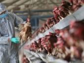 В Индии зафиксировали первый случай смерти человека от птичьего гриппа