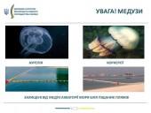 В Азовском море значительно больше медуз