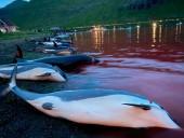 Фарерские острова расследуют рекордное убийство дельфинов