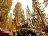 Многочисленные лесные пожары в Калифорнии, угрожают столетним гигантским секвойям
