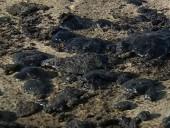 У побережья Калифорнии произошел масштабный разлив нефти